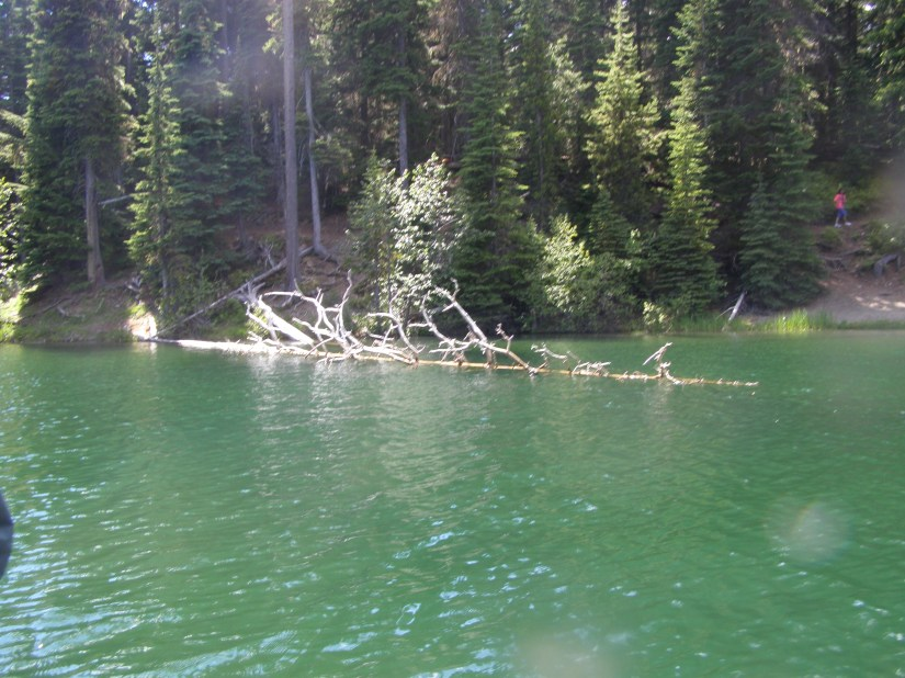 INTO THE FOREST WE WILL GO – FRIDAY'S PHLOG FOR JUNE 27,2014