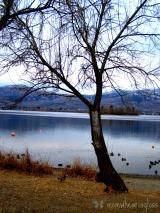 WINTER TREES – FRIDAY'S PHLOG FOR FEBRUARY 14,2014