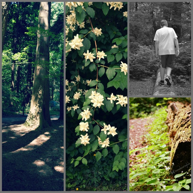 forest collage