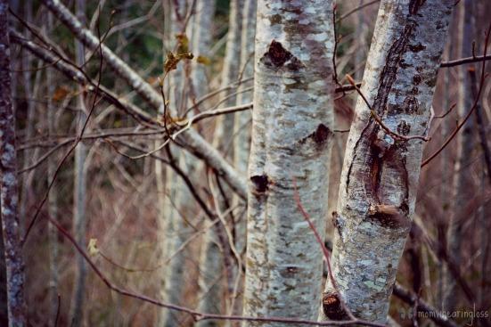 raw trees