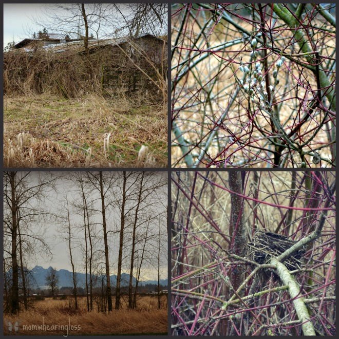 tree collage