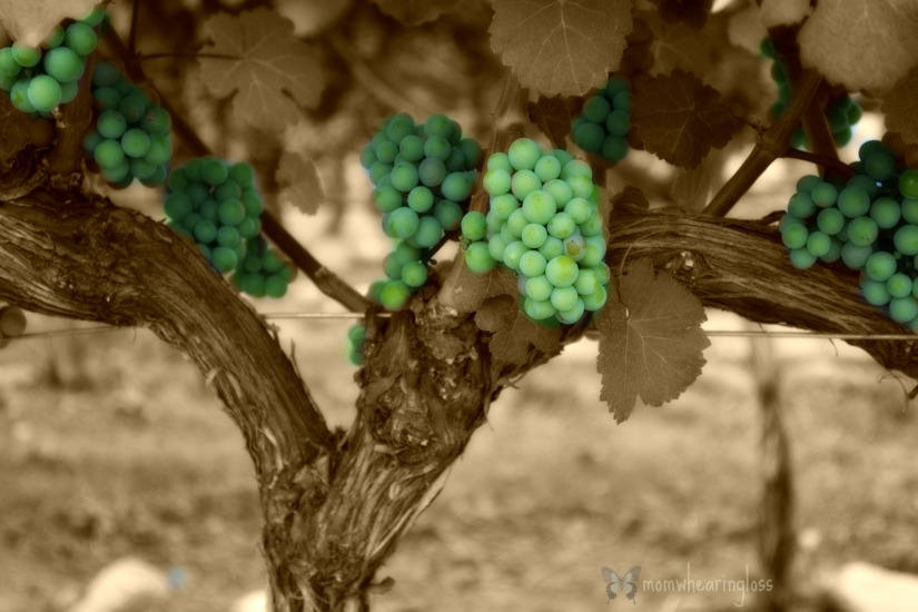 SENSUAL GRAPES – FRIDAY'S PHLOG FOR JUNE 5, 2015