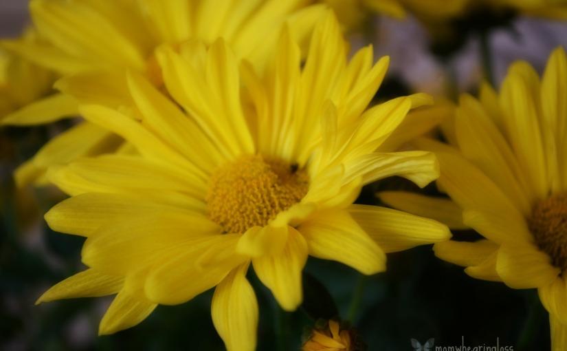 Flower for today – June 15,2015