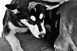 A DOG'S LIFE – FRIDAY'S PHLOG FOR SEPTEMBER 11,2015