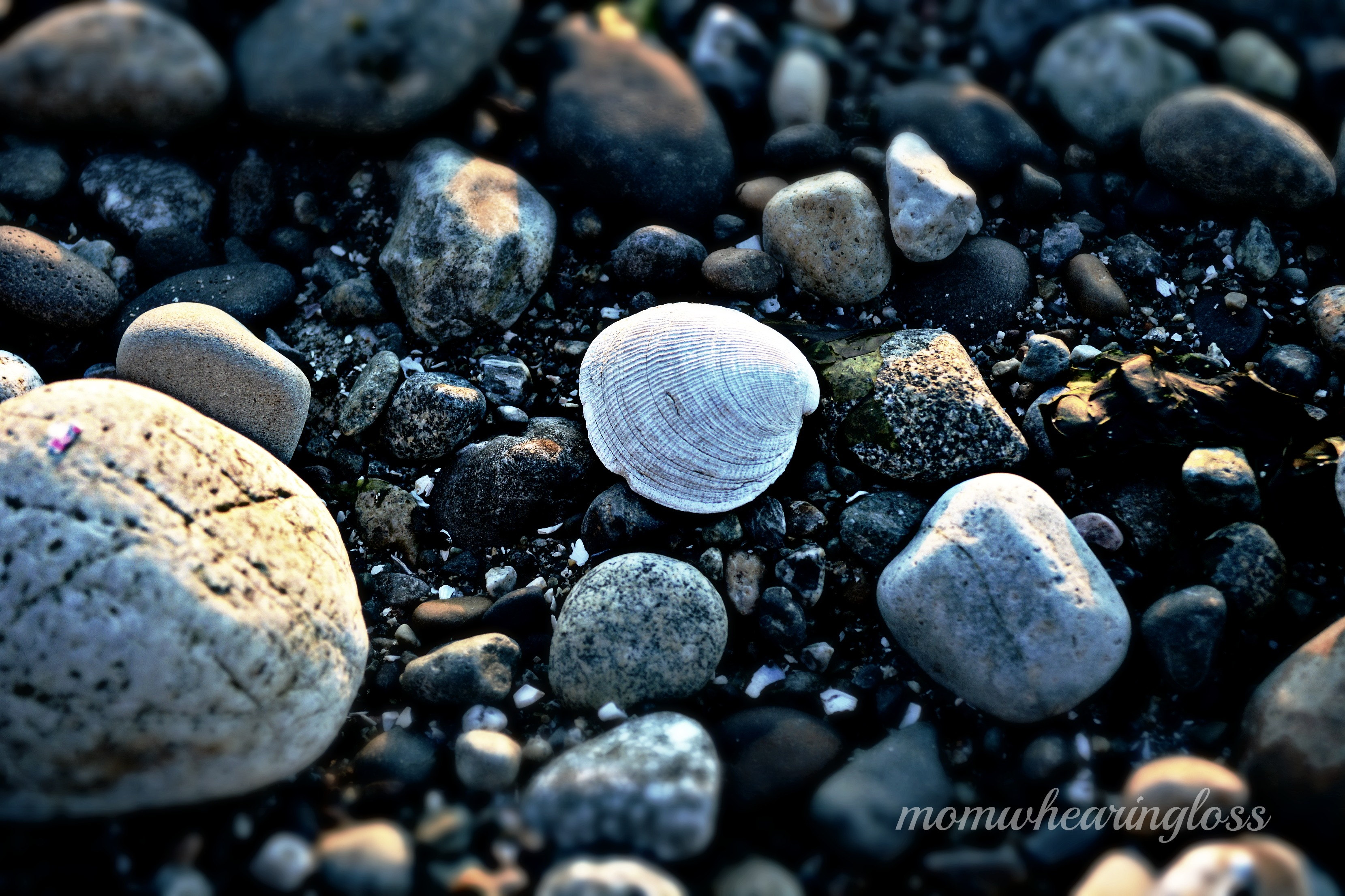rocks and shells