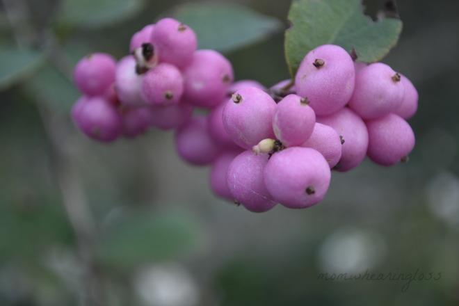 pinkblossoms